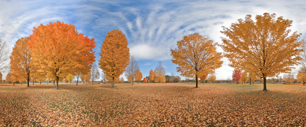 Maple trees at Huron Metro Park in Dexter, Michigan